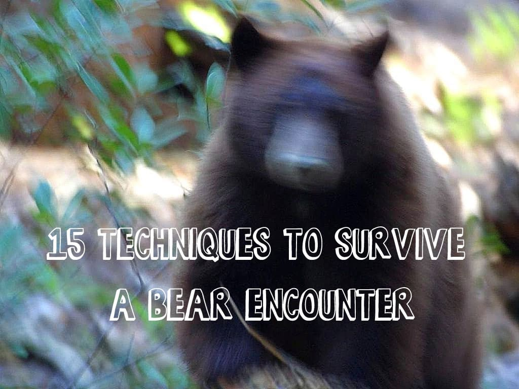 15 techniques to survive a bear encounter