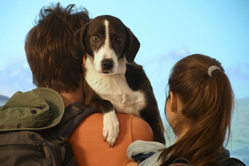 Hiking with your dog is it a good idea?