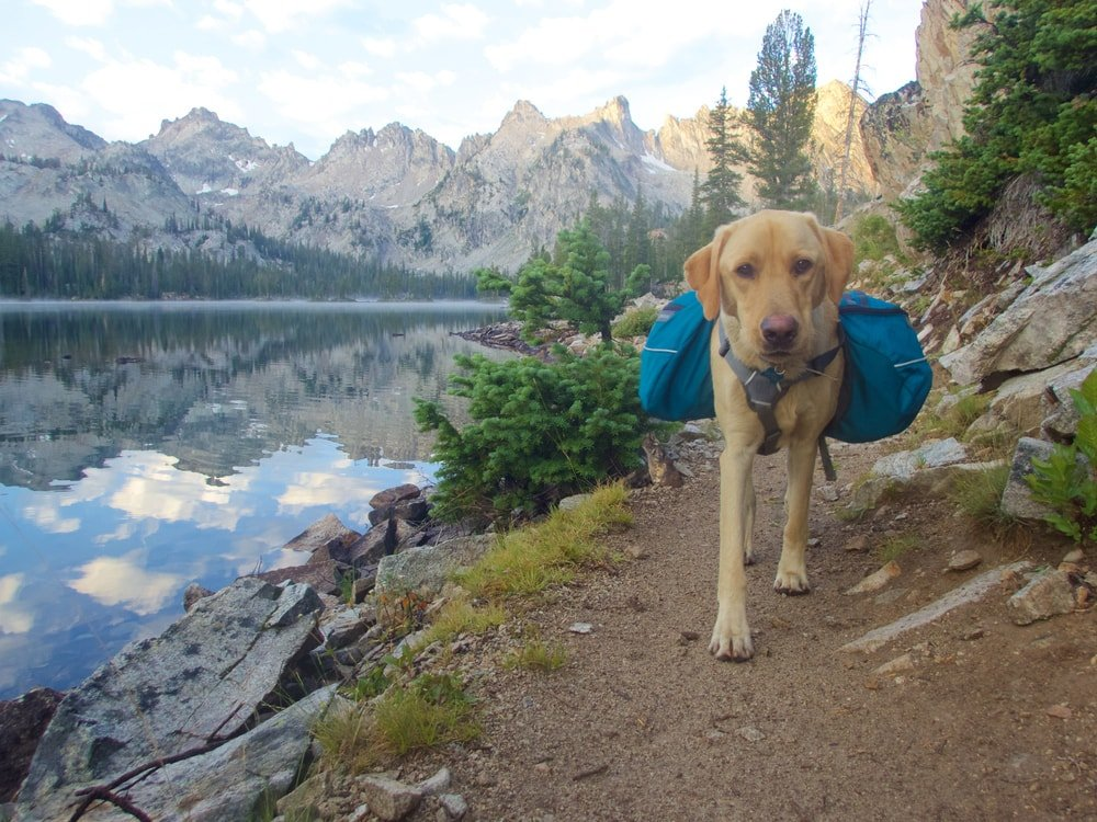 Hiking with your dog with adapted gear