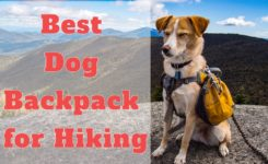Best dog backpacks for hiking – Ultimate guide to help you choose