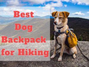 Best dog backpacks for hiking