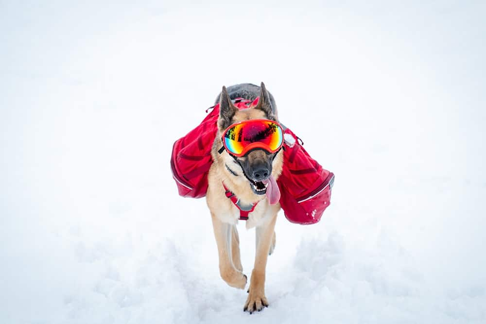 Composition of a dog backpack for hiking