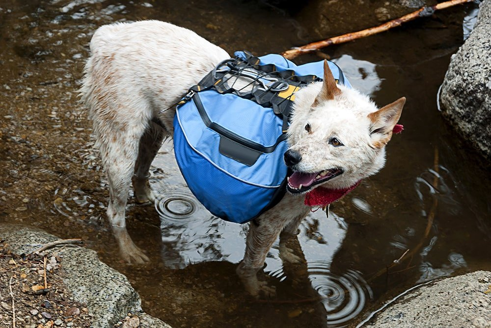Dog backpack for hiking - Adaptation phase